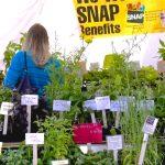 Needham Farmers Market's Ten-Year Tenure!