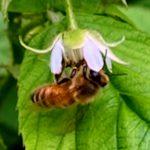 Bee-utiful!