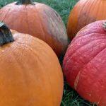 Pumped for Pumpkins?